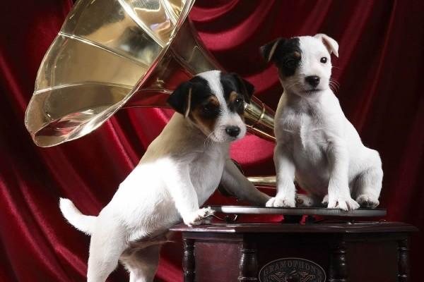 Perros escuchando música sobre un gramófono