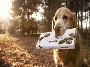 Perro con con una caja de bombones