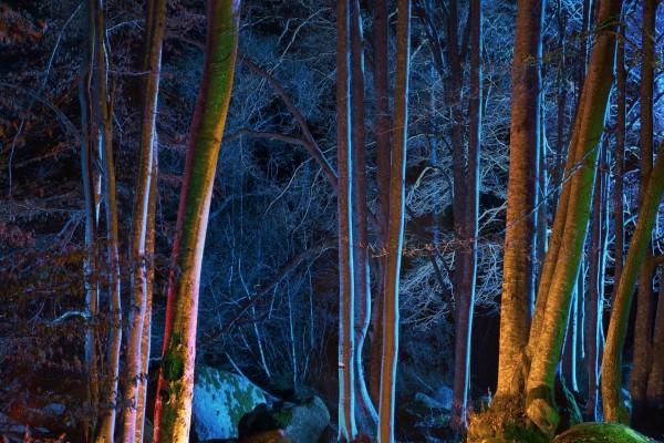 Luces en la noche en un bosque