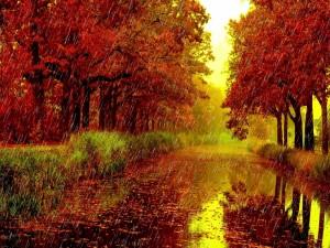 Día de lluvia en otoño