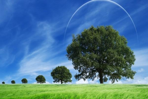 Árboles en un extenso campo
