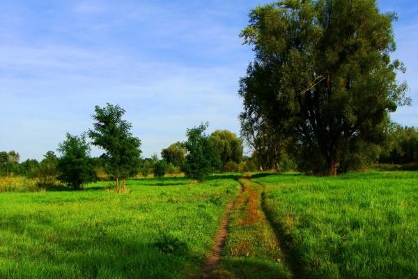 Camino verde en un campo
