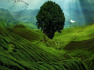 Árbol en un extenso campo verde