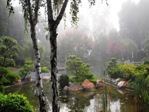 Niebla en un bello jardín oriental