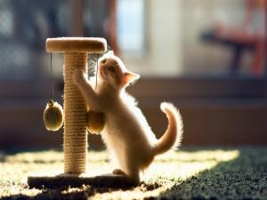 Gatito afilándose las uñas