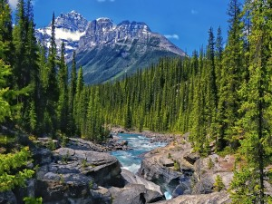 Postal: Pinos verdes a orillas de un río