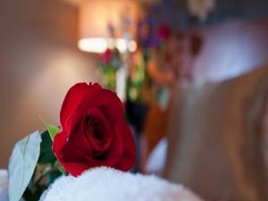 Postal: Una rosa roja sobre la cama