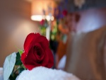Una rosa roja sobre la cama