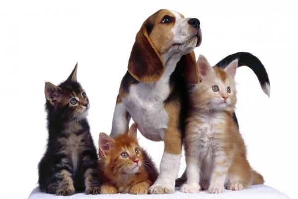 Perro entre gatitos