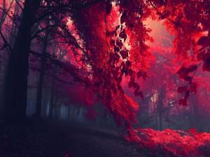 Postal: Bosque de árboles rojos