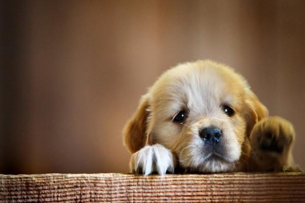 Cachorro con cara triste