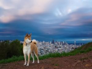 Perro paseando a las afueras de la ciudad