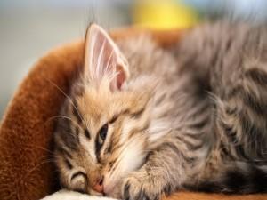 Gato con un ojo abierto