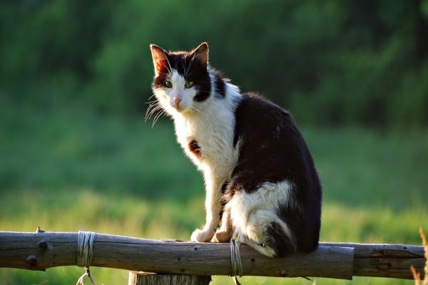 Un gato sobre una baranda de madera
