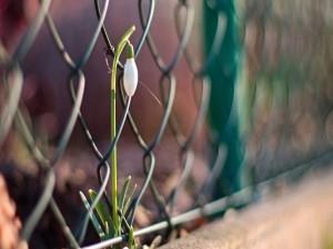 Postal: Preciosa flor creciendo junto a una valla