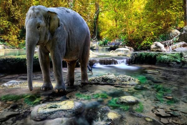 Elefante en un río