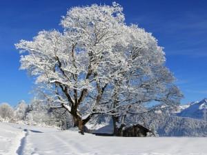 Hermoso paisaje invernal cubierto de nieve