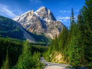 Carretera entre montañas y pinos (Canadá)