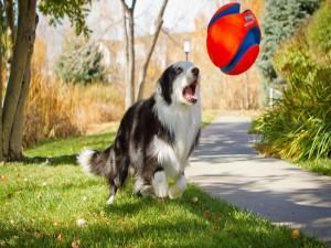 Postal: Perro jugando con una pelota
