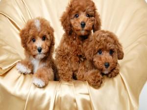 Postal: Cachorros adorables
