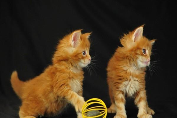 Gatitos juguetones