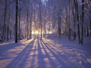 Bello amanecer cubierto de nieve