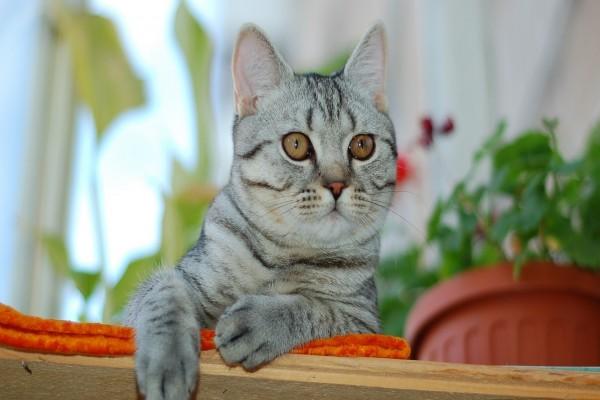 Un bonito gato tumbado sobre una manta naranja