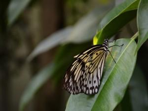 Postal: Una vistosa mariposa sobre una hoja verde
