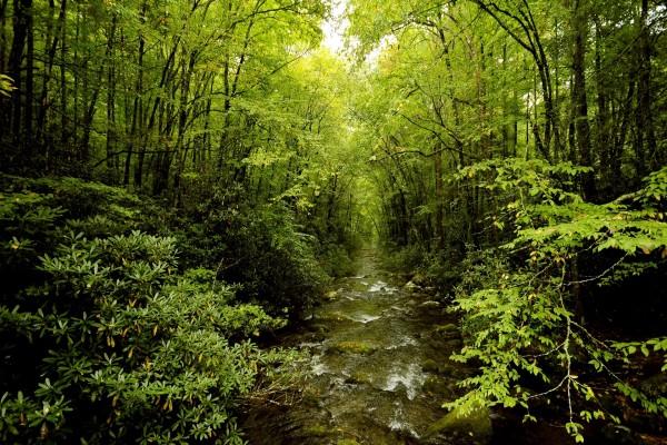 Riachuelo en el interior de un verde bosque