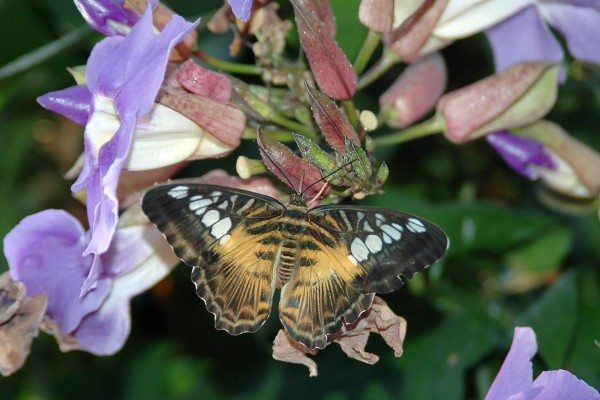 Una mariposa sobre una planta con grandes flores