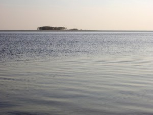 Postal: Árboles en una isla lejana