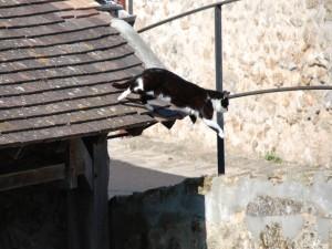 Gato saltando desde un tejado