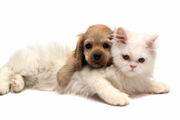 Cachorro sobre un gato blanco