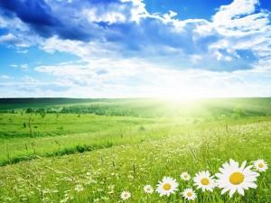 Postal: Brillante sol iluminando un campo con margaritas