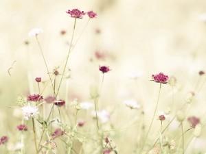 Postal: Lindas flores silvestres