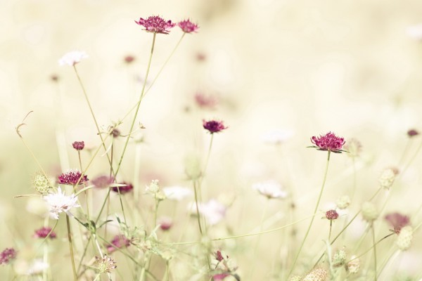 Lindas flores silvestres