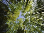 Altos árboles creciendo hacia el cielo