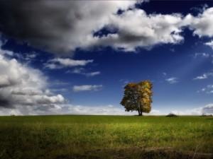 Postal: Un árbol solitario