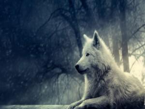 Un hermoso lobo blanco