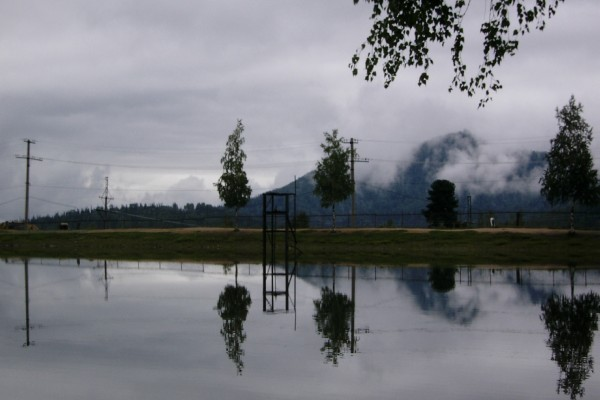 Árboles reflejados en agua un día nublado