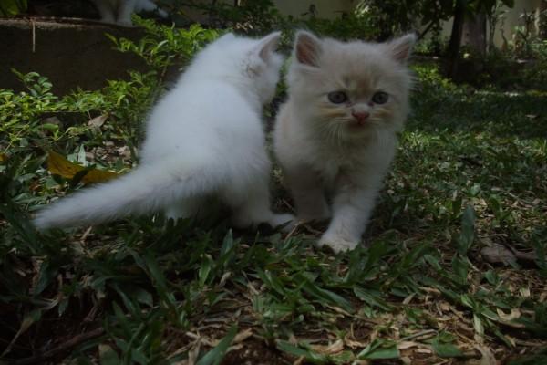 Dos gatitos blancos en un bosque