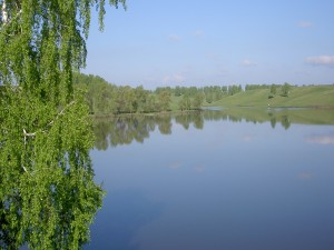 Árboles verdes junto al lago