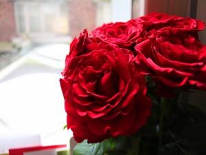 Un hermoso ramo de rosas rojas