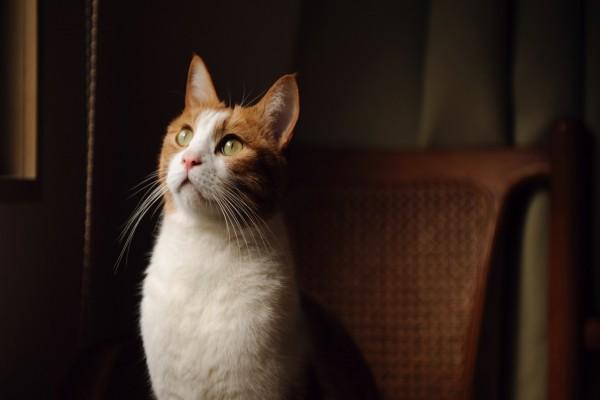 Un hermoso gato mirando atentamente