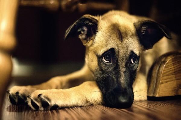 Un cachorro con la mirada triste