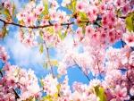 Flores rosas en primavera