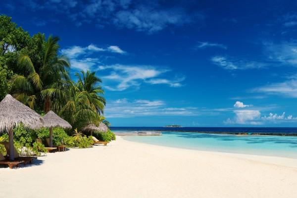 Tumbonas en una playa