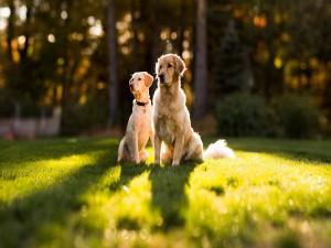 Dos hermosos perros sentados en la hierba