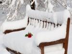 Rosa sobre un banco cubierto de nieve