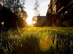 Césped recibiendo la luz del sol